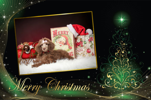 Photo Makers Christmas Cards